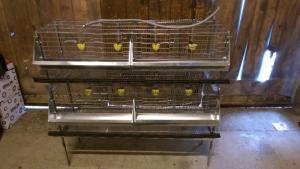 Cage pour 32 cailles