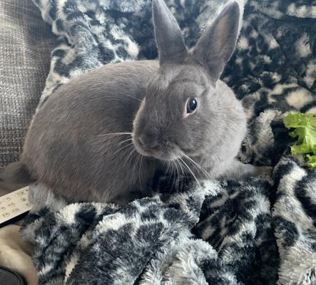Je vends couple lapins nains