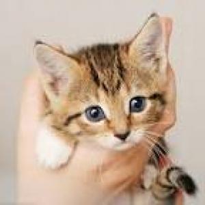 Je cherche un chaton 2-4 mois