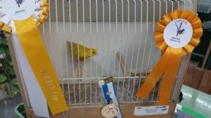 Arête mon élevage de canaris