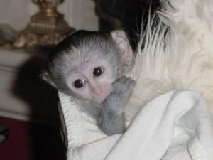 Adorable singe femelle