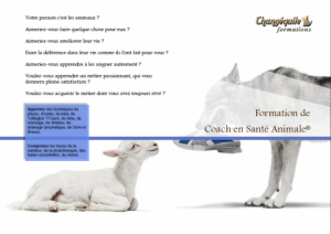 formation coach en santé animale chien