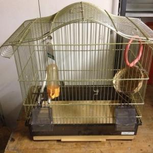 Jolie cage dorée