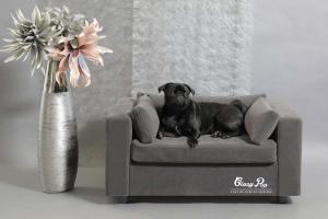 Canapés design pour chien et chat