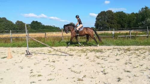 Jeune cheval de loisirs/Club