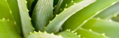 Produits Aloe Vera, qualité allemande