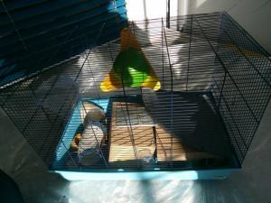 Grande cage bleu