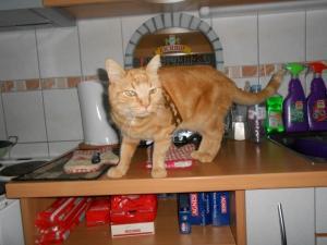 un chaton roux