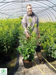 Arbustes pour haie à prix réduits