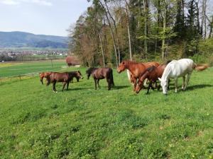 Pension pour chevaux en stabulation libre