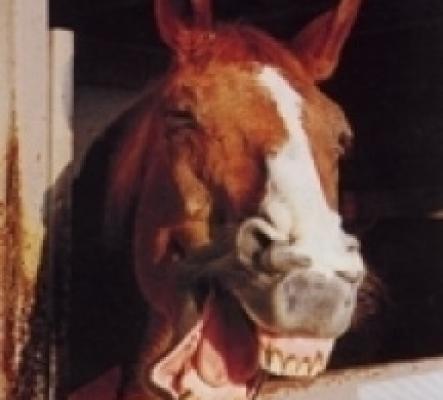 Zahnpflege für pferde