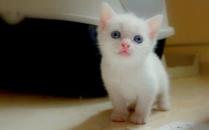 Recherche chaton max. 3mois