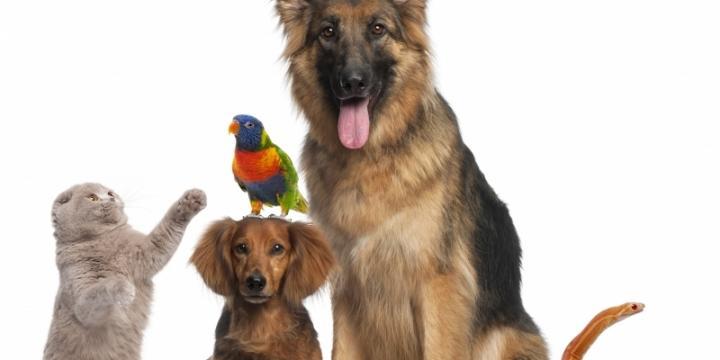 Cours de communication animale
