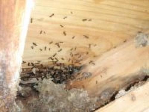 Le traitement de bois