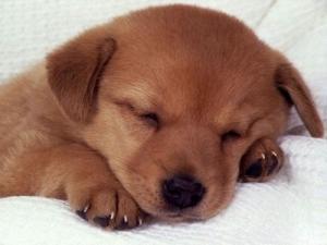 Garde des chiens sympa