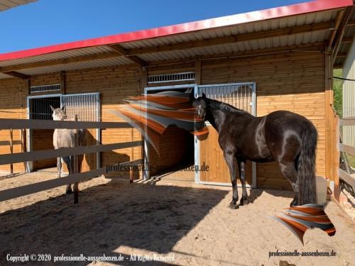 Außenboxen ,Pferdeställe, Pferdeboxen, Weidehütte