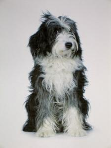 Salon canin à Vevey