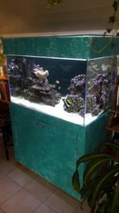 Aquarium récifal (eau de mer) 330L