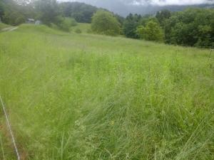 Location pré à pâturage à l'année pour cheval