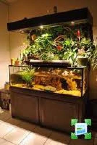 Fabrication Terrarium Aquarium Decor Joomil Ch