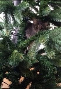 Recherche chat mâle pour sailli