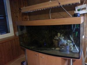 magnifique aquarium 450L complet