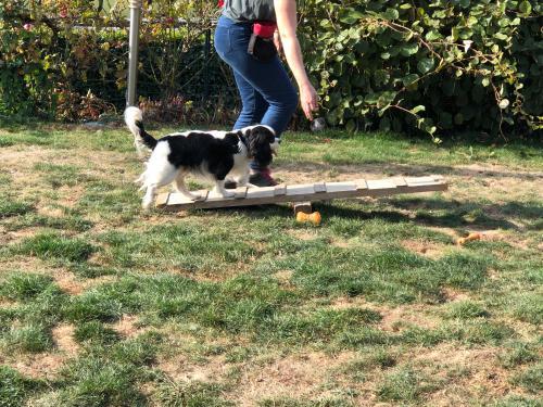 Cours d'éducation Canine