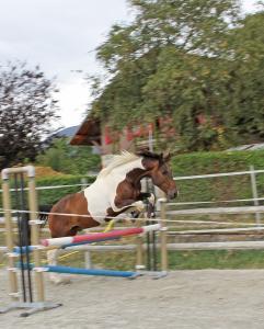 Splendide cheval pie