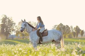 Gentil cheval à vendre
