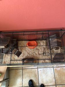 Cage en verre pour petits animaux