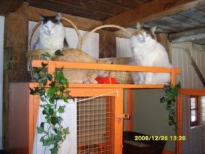 "Chatterie ""Ron Ron"", pension pour chats"