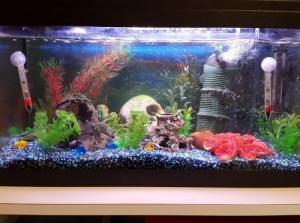 Aquarium 54l avec matériel et poissons
