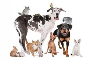 Famille accueille chiens et autres