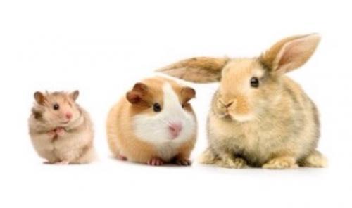 Pension pour lapin et cochon d'inde