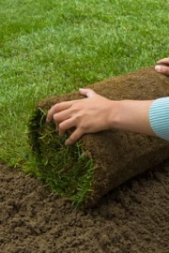 Gazon précultivé - Jardinerie Constantin