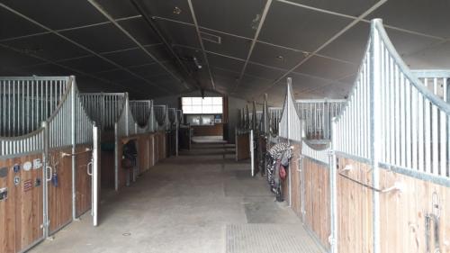 Boxes à louer, pension pour chevaux