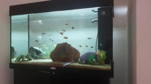Aquarium Rio 125 complet