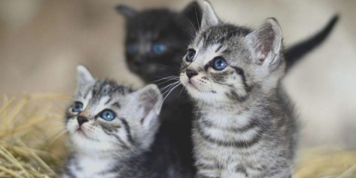 Cherche chaton femelle