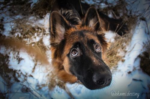 Shooting photo de votre animal ou de vous