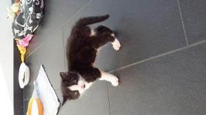 A Donner deux petits chats contre bon soin.