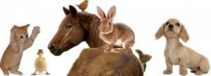 Méthode apprendre télépathie animale