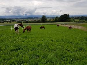 Corges-Payerne boxe pour chevaux à louer Fr.380 ou 620