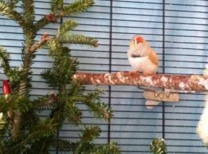 Adopte petits oiseaux sur neuchatel....