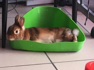 Vends lapine avec sa cage