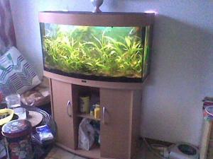 Avendre un Aquarium Panoramique Comlpet