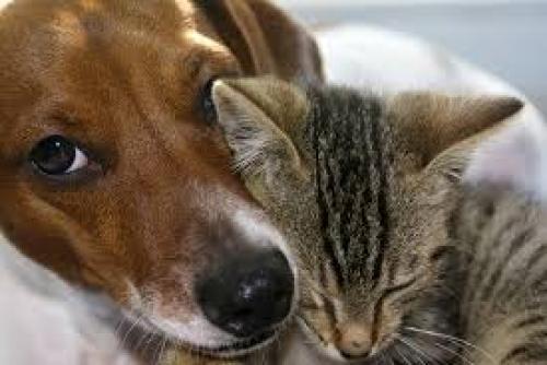 Communication animale – pour leur bien-ête