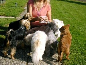 Biscuits 100% naturels pour chiens