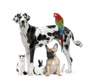 Dog Walker & Pet Sitting (Animal Group)