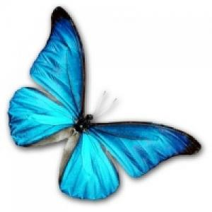 Des papillons-Vivants pour vos cérémonie