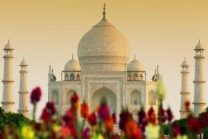 Séjour en Inde, Pushkar  Jodhpur Voyage